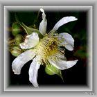 Y una flor...II