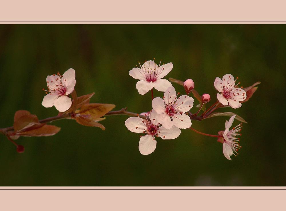 Ya Florecen - Para NURIA SEMPERE