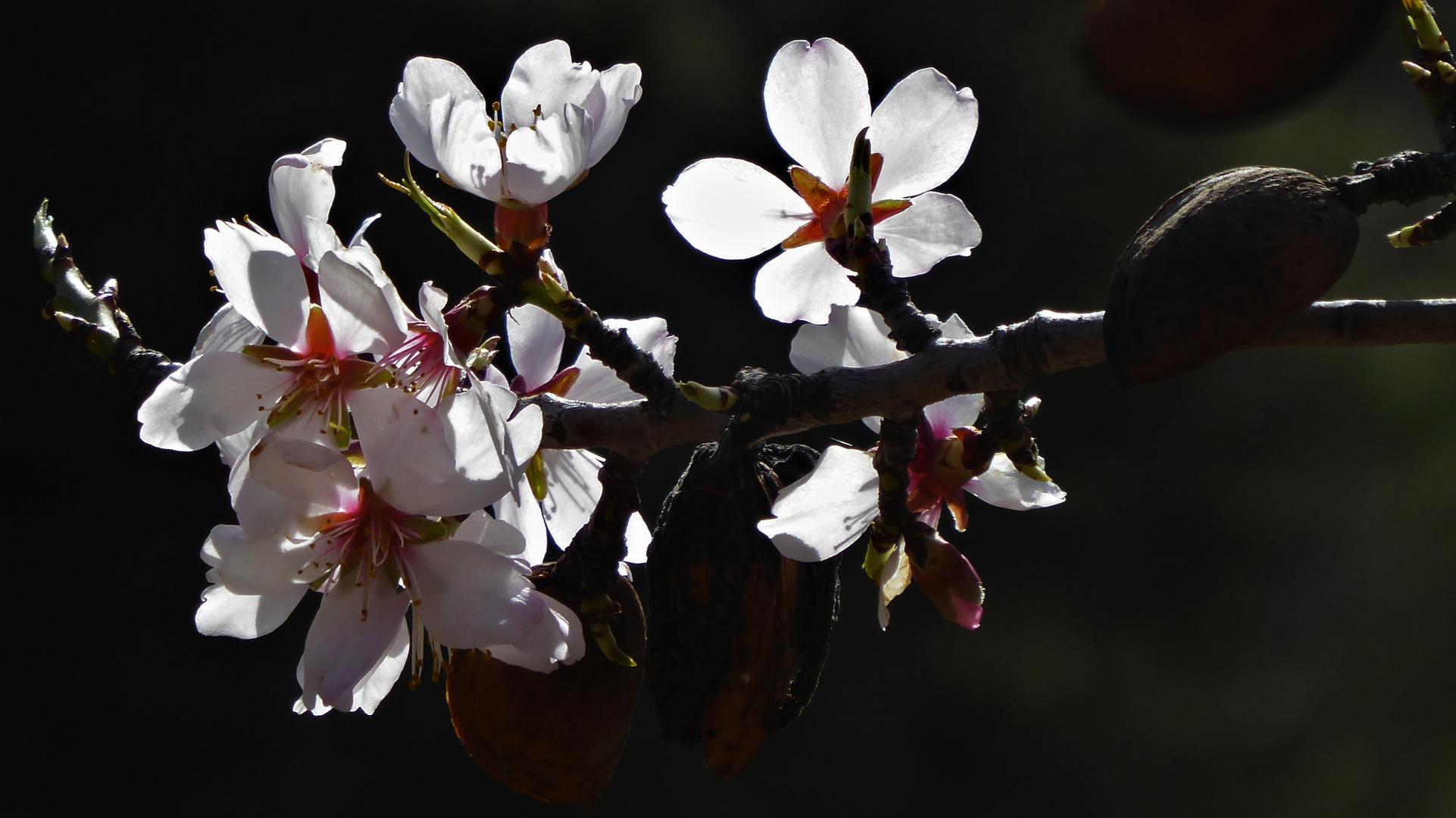 Ya se huele la Primavera