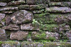 Yaxchilan - Die Natur kehrt zurück