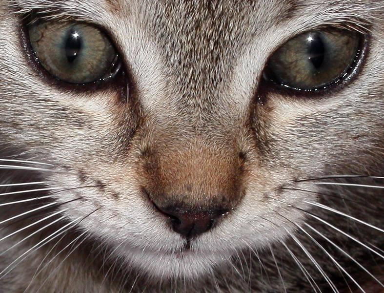 Year of the Cat, Al Stewart