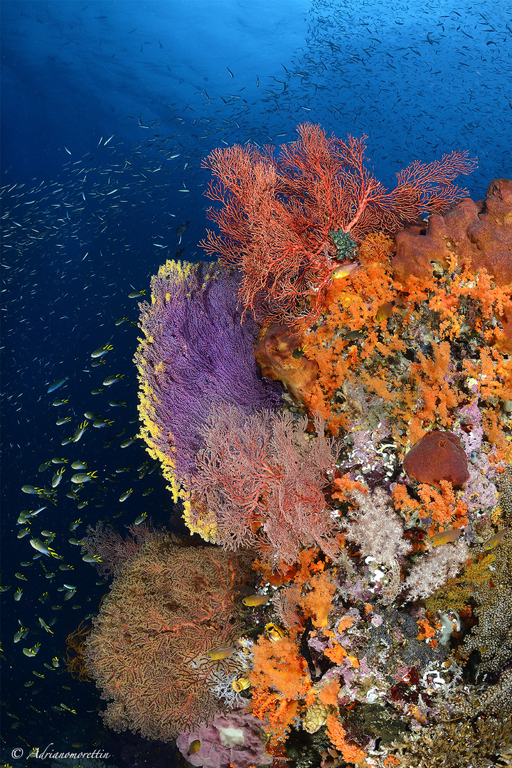 yellow and pink seafan