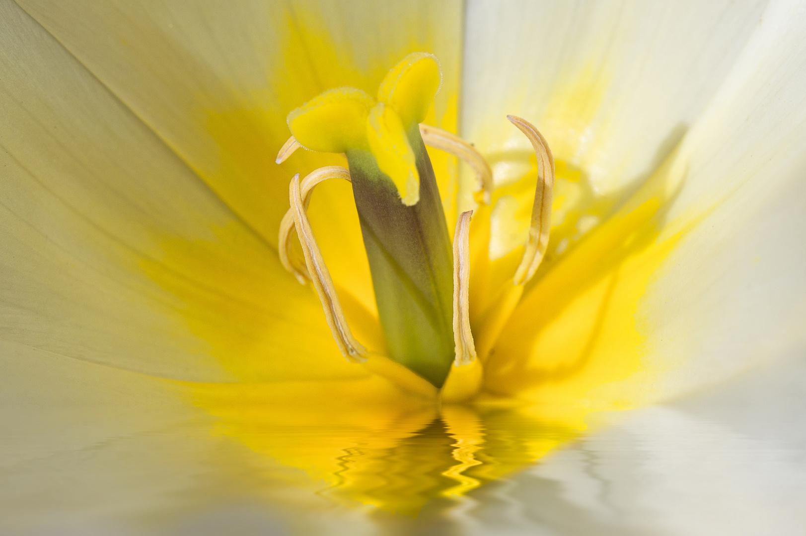 yellow-aqua