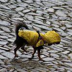 Yellow Blind Dog