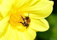 - Yellow -
