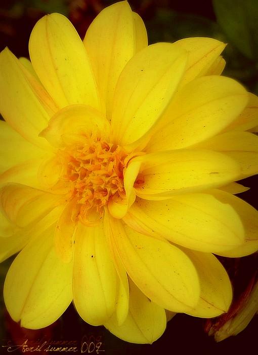 Yellow flower; beach & sun