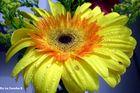 Yellow flower..