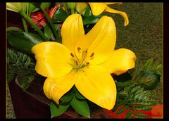 Yellow flower for Claudine