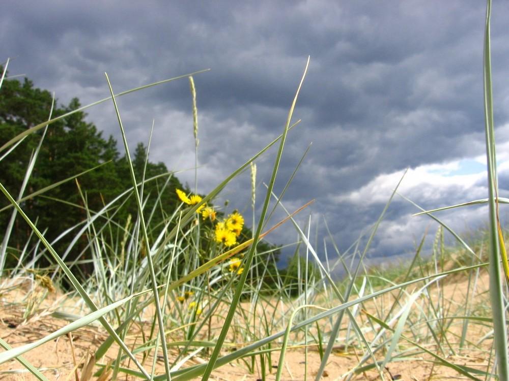 yellow flowers - dark sky