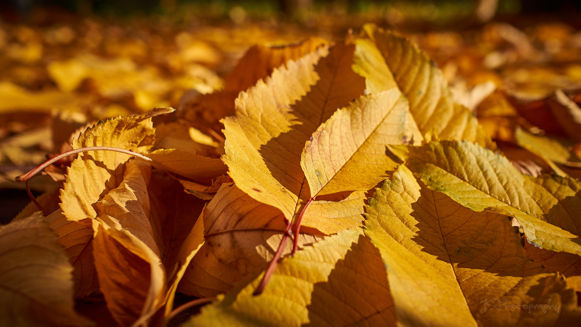 Yellow Leaves Forest