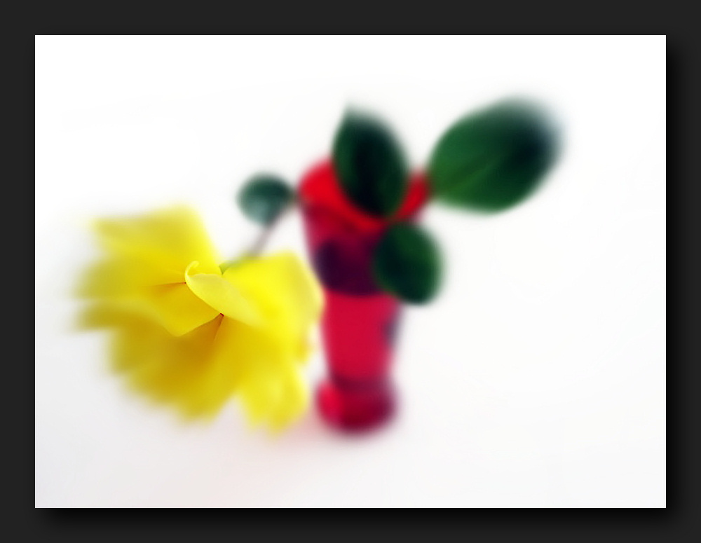 Yellow rose in red vase