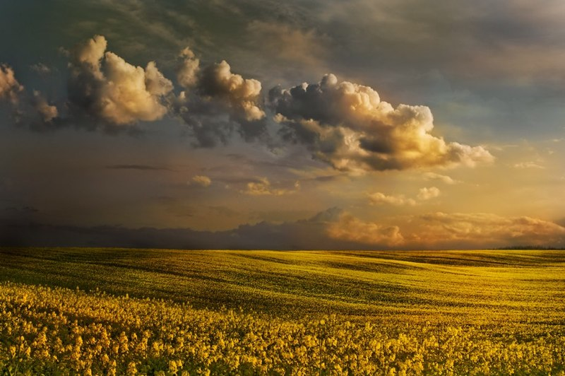 ...yellow sea...