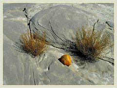 Yellow stone 2