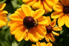 Yellow summer dream