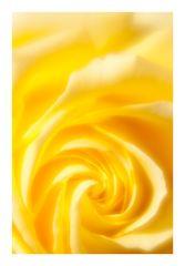 Yellow voltex