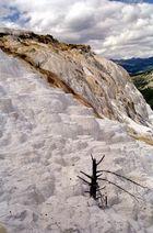 Yellowstone - Mammuth Hot Springs
