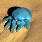 yellyfish