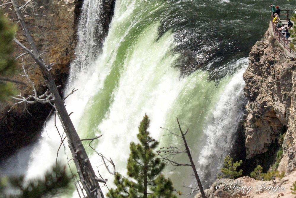 YNP Lower Yellowstone-Wasserfall 2.8.15