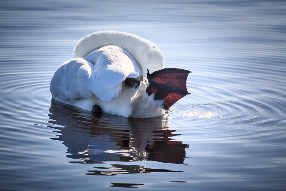 ... Yoga auf dem See ...