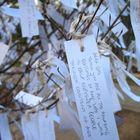 Yoko Ono's wish tree for Washington DC