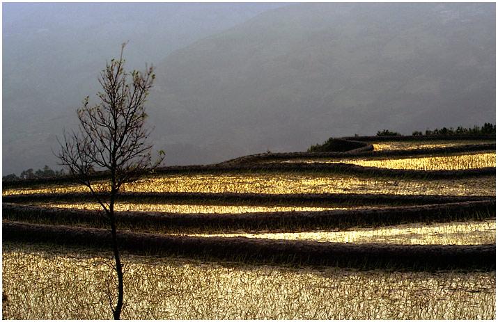 Yuanyang 4