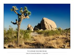Yucca-Palme und Jumbo Rocks