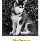 """Yukon - der neue """"Mann"""" im Hause"""