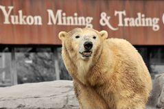 Yukon Mining & Trading ....