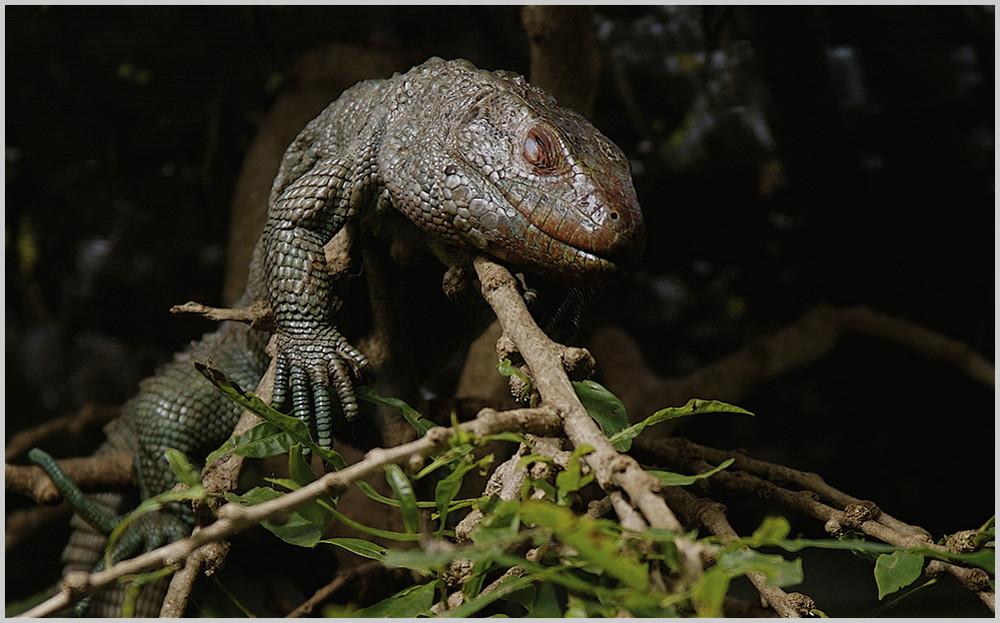 zählt der nun zu Amphibien oder zu Reptilien ?