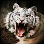 Zähne zeigen ...