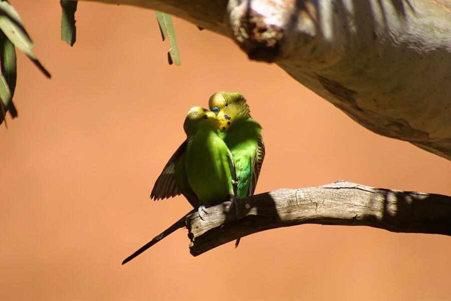 Zärtliche Vögel