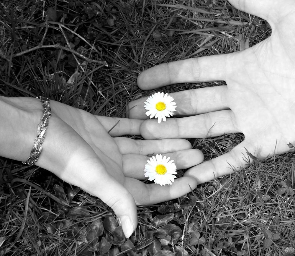 Zärtlichkeit Foto & Bild | youth, sehnsucht, gänseblümchen