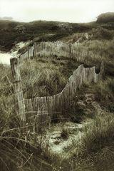 Zäune in Dünen (1)