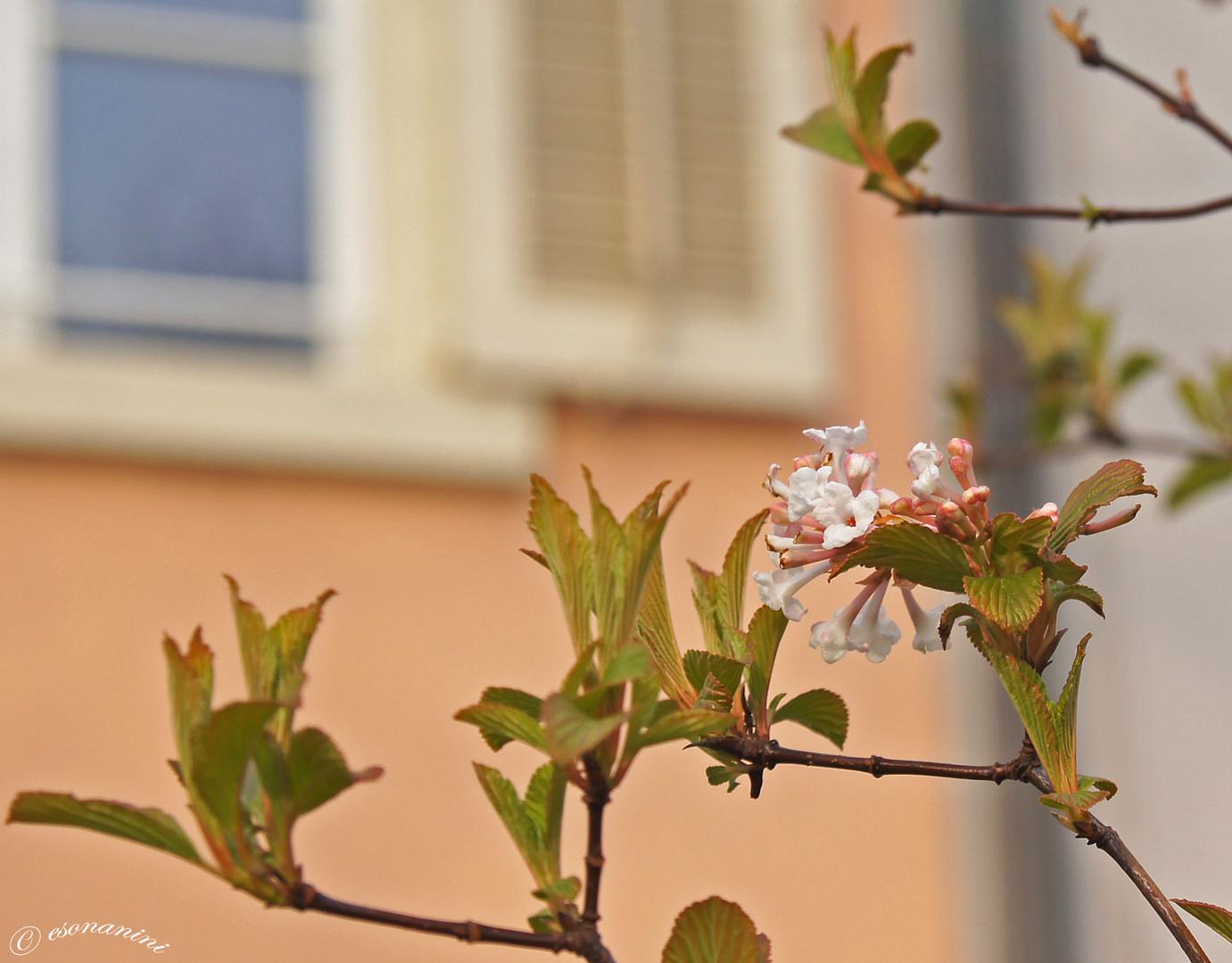 ' zaghafter Basler Frühling '