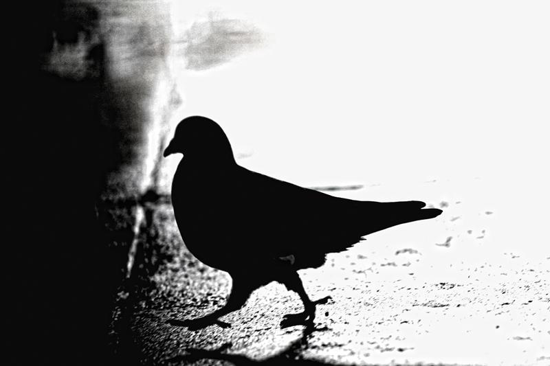 Zahme Vögel träumen von Freiheit…