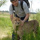 Zahmer Gepard