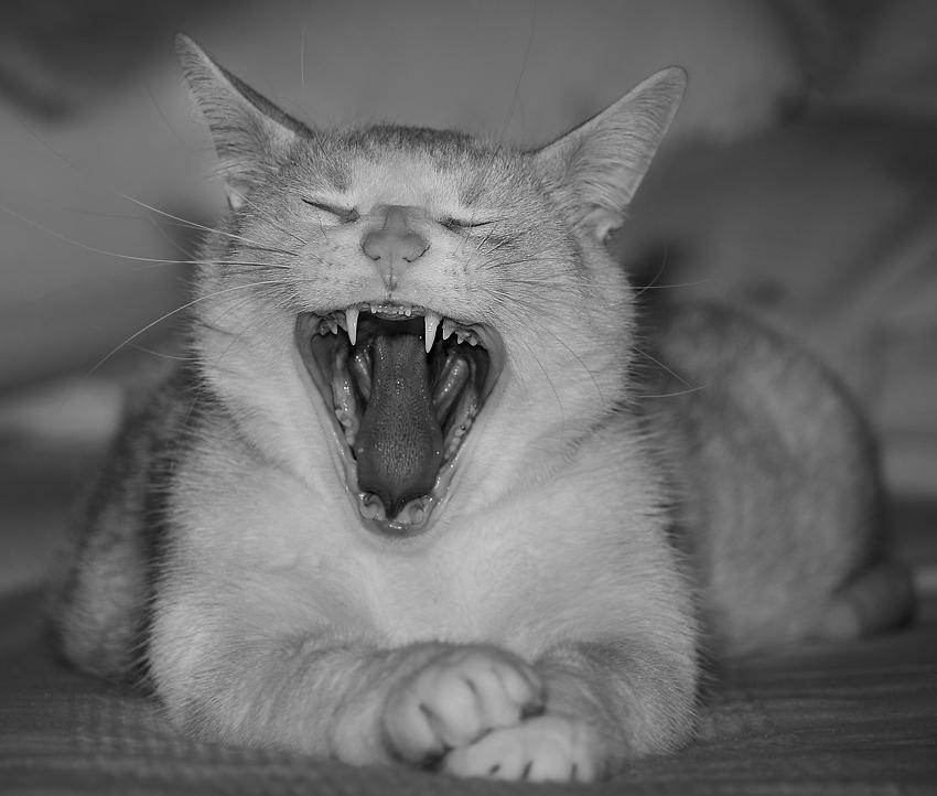 Zahn um Zahn...