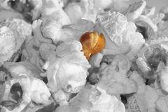 Zahnbrecher - Die Popcornfalle