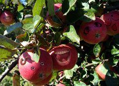 Zankäpfel