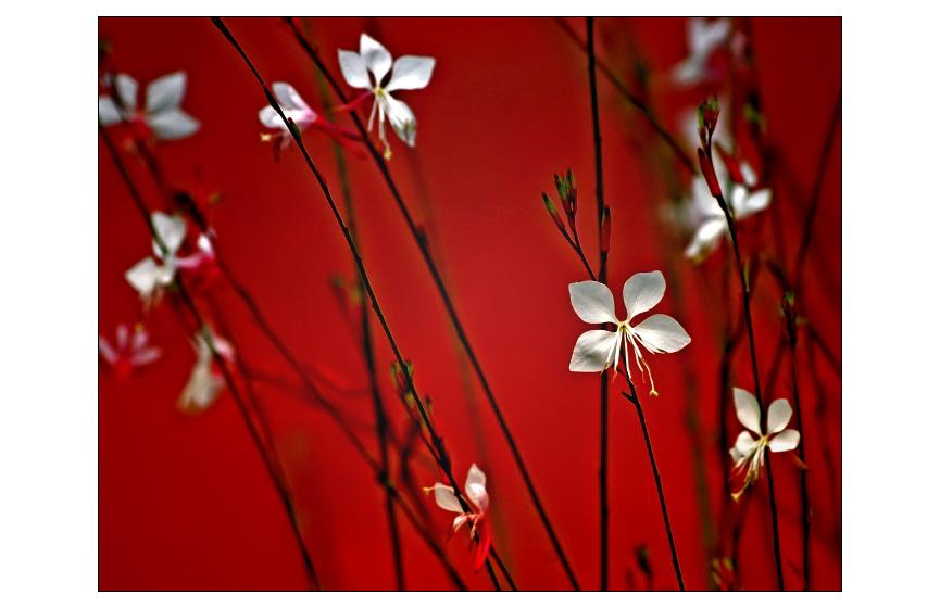Zart in Rot