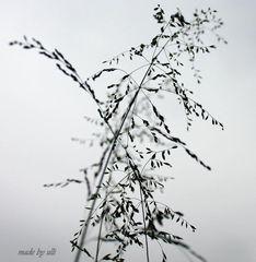 Zart und fein in Schwarz/ Weiß