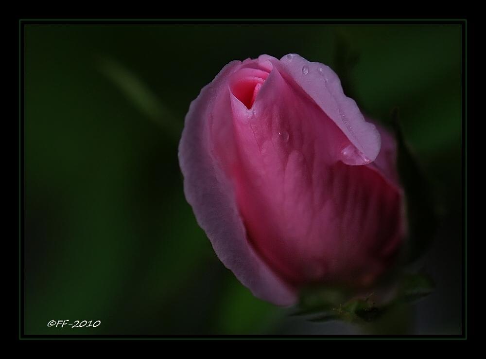 ... zart und klein und regennass ...