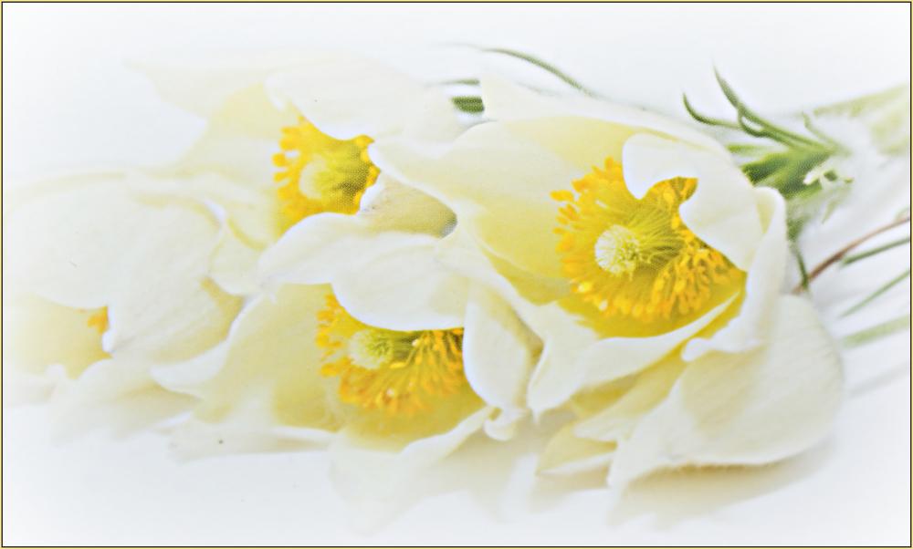 Zart und zerbrechlich, wie eine Blume........