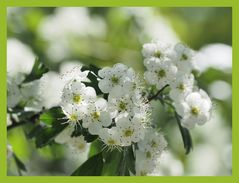 zart weiß grün