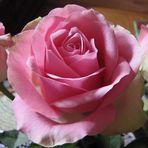 ...zarte Blüte....