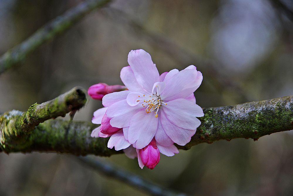 Zarte Blüte und knochiges Holz