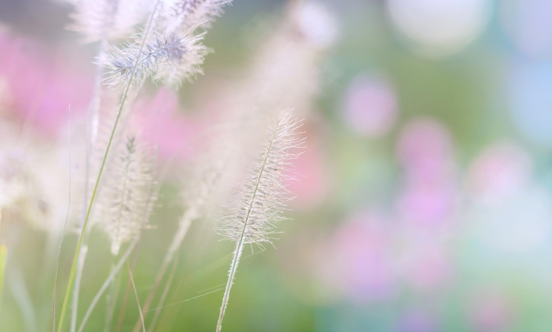 zarte gräser im gegenlicht ...