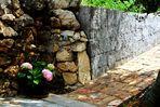 Zarte rosa Hortensien entlang der schönen Naturstein Mauern