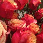 zarte Rosen für den Sonntag