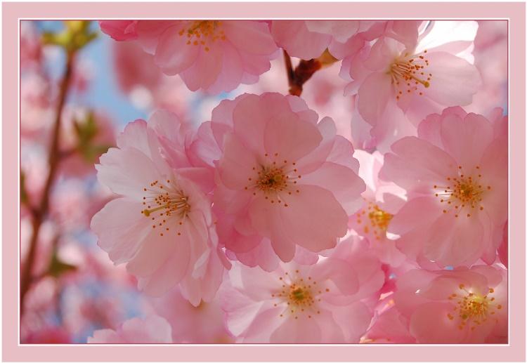 Zarter Blütentraum